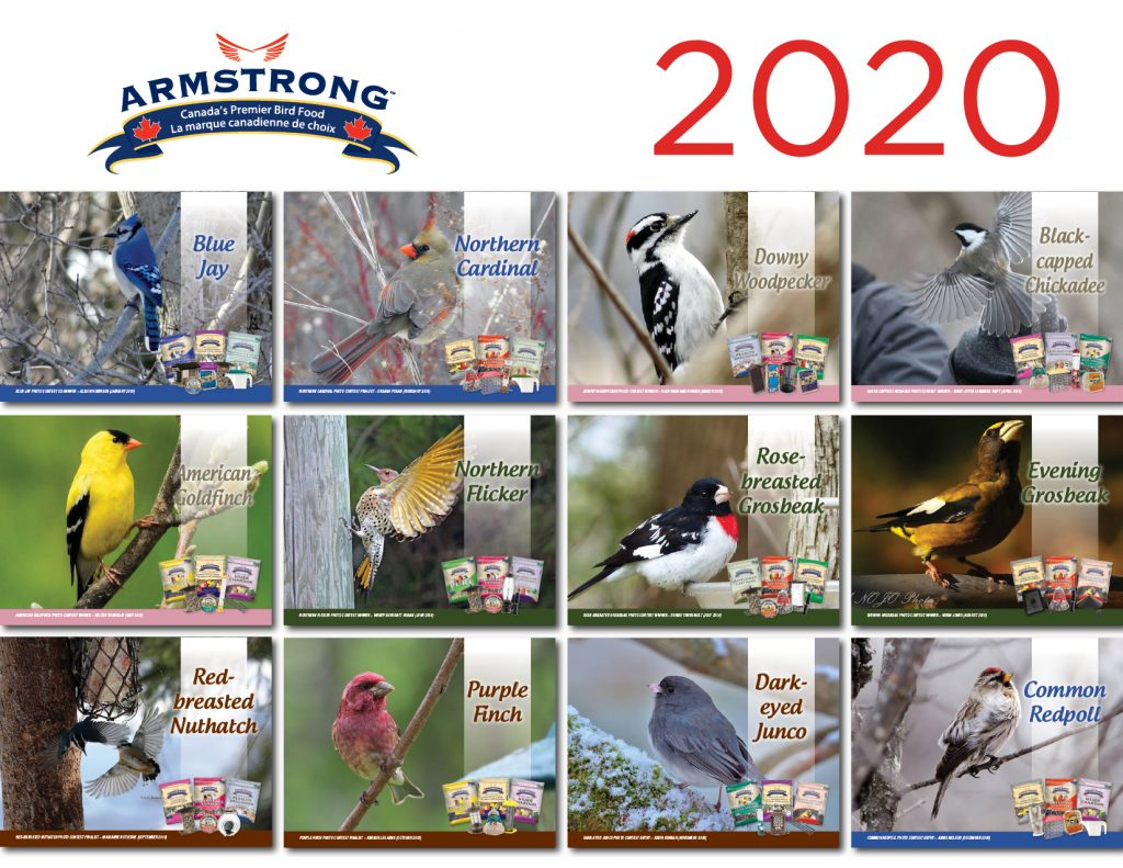 2020_ArmstrongCalendar_ENG - 12 Birds of the month collage